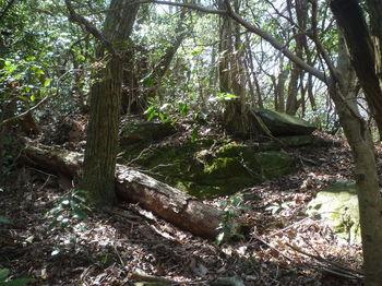 P1310943分岐の小岩(逆方向).JPG