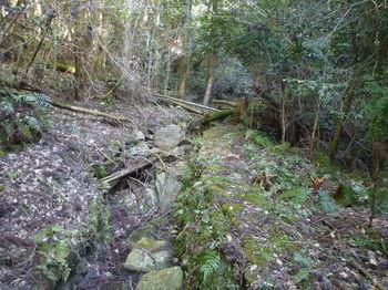 P1320005えぐれた林道.JPG