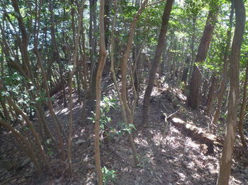 P1320074倒木の目立つ平坦尾根.JPG