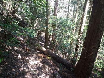P1320083北側植林谷への山道.JPG