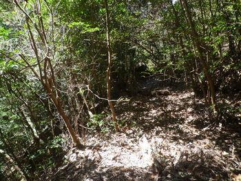 P1320084南谷方向への山道.JPG