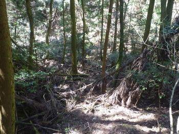 P1320091荒れ植林谷.JPG