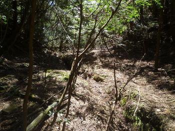P1320094涸れ沢・平坦な谷.JPG