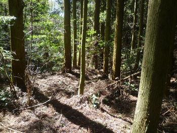 P1320096植林帯.JPG
