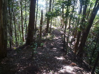 P1320116植林沿い・土塁状.JPG