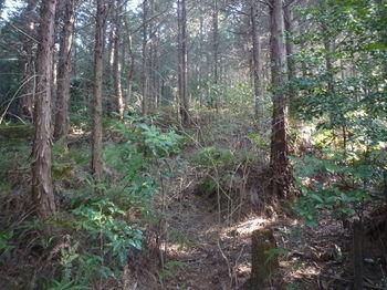 P1320137植林尾根の山道.JPG