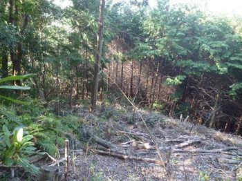 P1320140植林境から伐採斜面.JPG