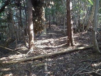P1320145雑木交じり植林境.JPG
