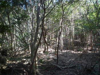 P1320160雑木疎林の平坦尾根.JPG