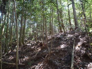 P1320230小尾根の植林境.JPG