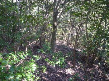 P1320285雑木疎林・下り.JPG