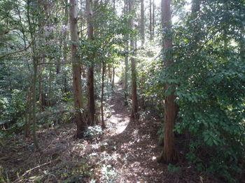 P1320371植林沿い.JPG