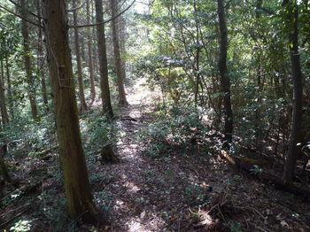 P1320387植林境.JPG