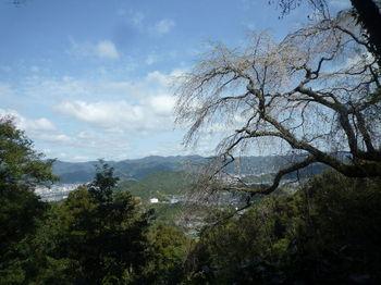 P1320395東鳳翩山・しだれ桜.JPG