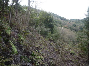 P1320449幼木植林地.JPG