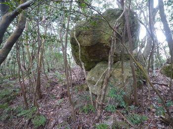 P1320492 340m重ね小岩.JPG