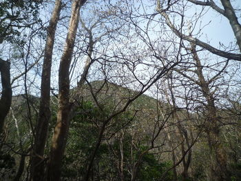 P1320586右方向樹間にショウゲン山.JPG