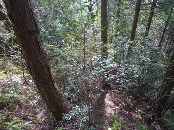 P1320601植林境・灌木ヤブ.JPG
