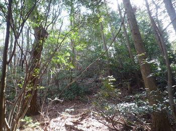 P1320608植林境尾根・上り.JPG