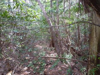 P1320615植林境・平坦尾根.JPG