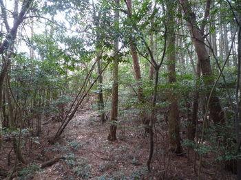 P1320618植林境・上り.JPG