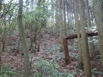 P1320628植林境・上り.JPG