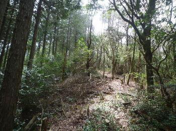 P1320667植林境尾根・上り.JPG