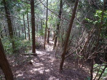 P1320677植林境・下り.JPG