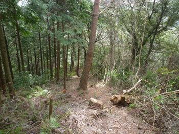 P1320680植林境・下り.JPG