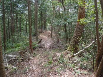 P1320683植林境・下り.JPG