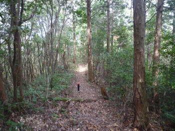P1320705植林沿い・下り.JPG