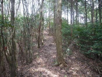 P1320716植林境・上り.JPG
