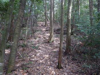 P1320727ヒノキ植林境・上り.JPG
