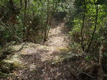P1320733小岩上を越える.JPG