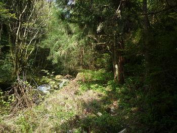 P1320824植林沿い.JPG