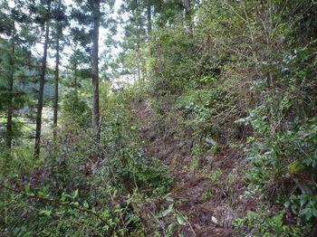 P1320835植林斜面の山道.JPG