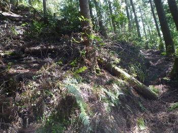 P1320841ジグザグの山道.JPG