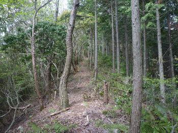 P1320847植林境.JPG