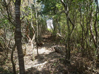 P1320855両側雑木林の急な登り.JPG
