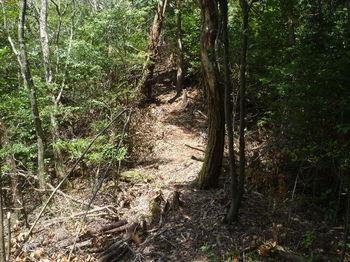 P1320857右ヒノキ植林境.JPG