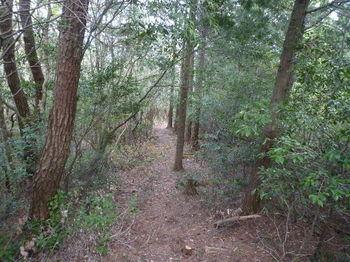 P1320863北側の植林境尾根.JPG