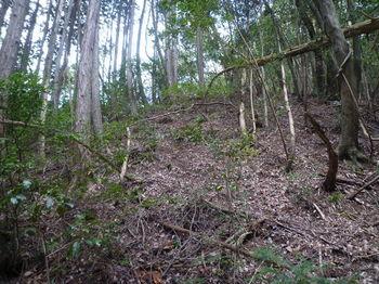 P1320893ヒノキ植林境の斜面を登る.JPG