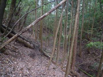 P1320899植林沿いの山道(そま道).JPG