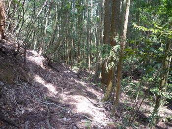 P1320905明瞭な山道.JPG