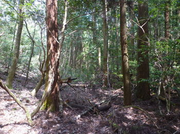 P1320907植林帯に入る.JPG