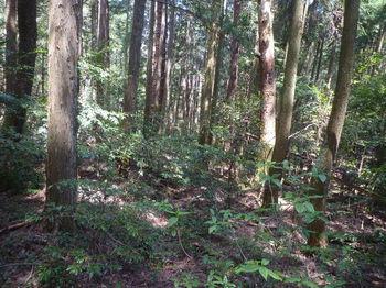 P1320909植林帯を進む.JPG