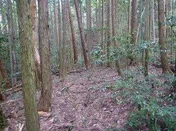 P1320911植林沿いの山道.JPG