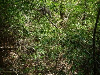 P1320920倒木の谷.JPG