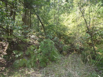 P1320923荒れ林道.JPG