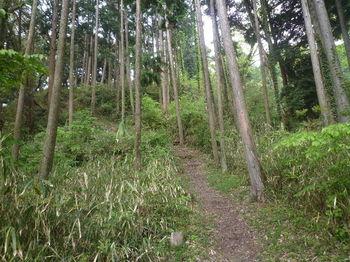 P1320994植林・ササ沿いの尾根道.JPG